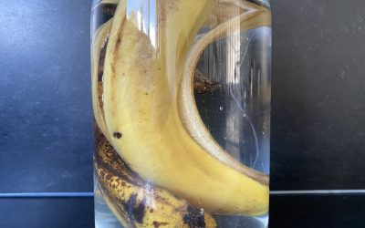 L'eau de banane, un bon engrais !!