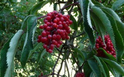 Les 8 choses que vous devriez faire à vous arbres fruitiers avant l'hiver